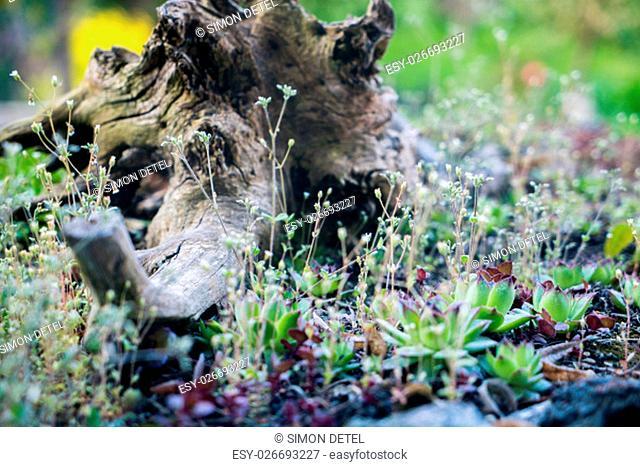 a tree stump in the grass closeup macro garden