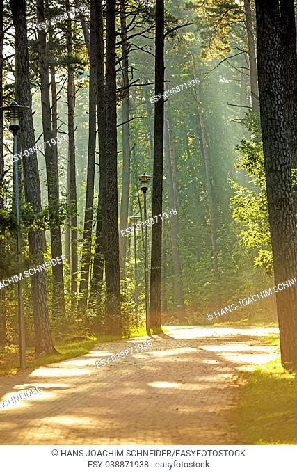 Forest in autumn in soft, sunny light in Poland