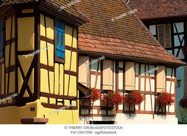 France, Haut Rhin (68), Eguisheim village (elected most beautiful french village), half-timbered hous, cours Unterlinden