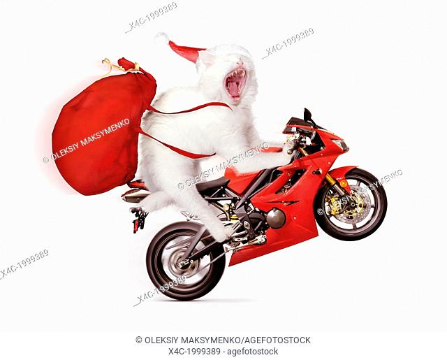 Humorous Christmas concept of a white cat doing a wheelie on a red sports motorcycle, wearing a Santa hat and carrying a large bag of presents isolated on white...