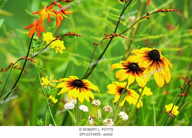 Mixed flowers bloom in a garden; Astoria, Oregon, United States of America