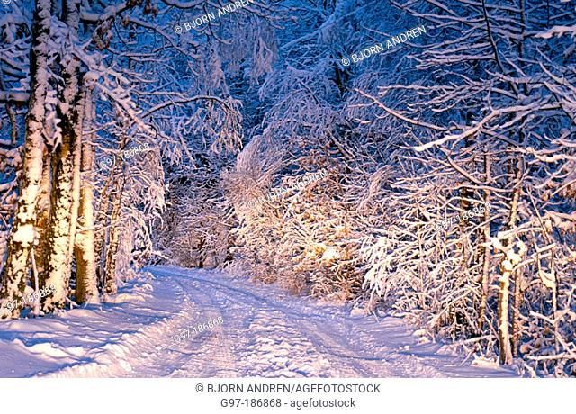 Snow covered road. Sweden