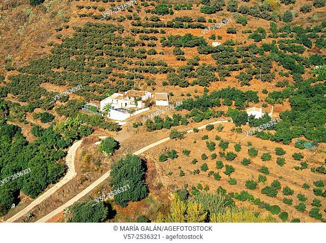 Cultivation field. La Axarquia, Malaga province, Andalucia, Spain