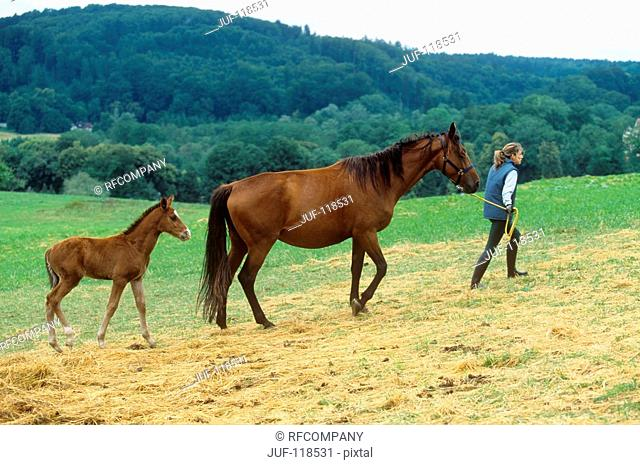 Sarvarer and foal with woman
