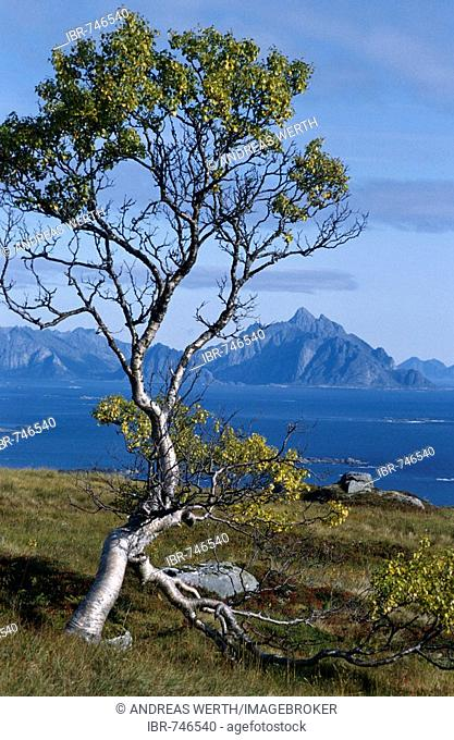 Mt. Vagekallen near Henningsvaer on Austvagoy Island, seen from a mountain near Stamsund on Austvagoy Island, Lofoten, Nordland, Norway, Scandinavia, Europe