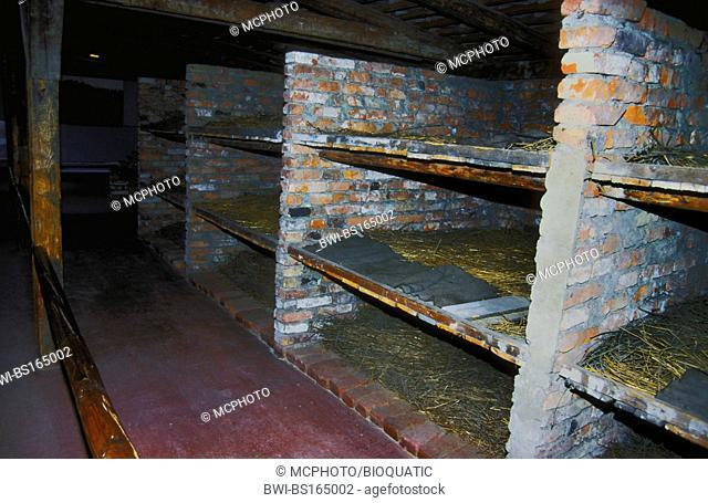 beds in barracks of concentration camp Auschwitz II - Birkenau, Poland, Auschwitz