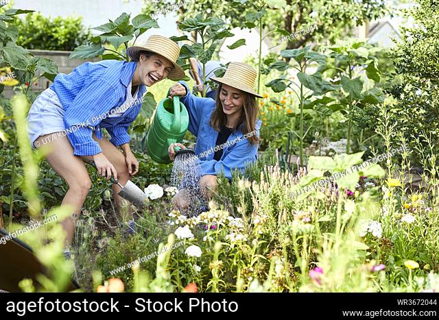 Happy female friends watering flowers in community garden