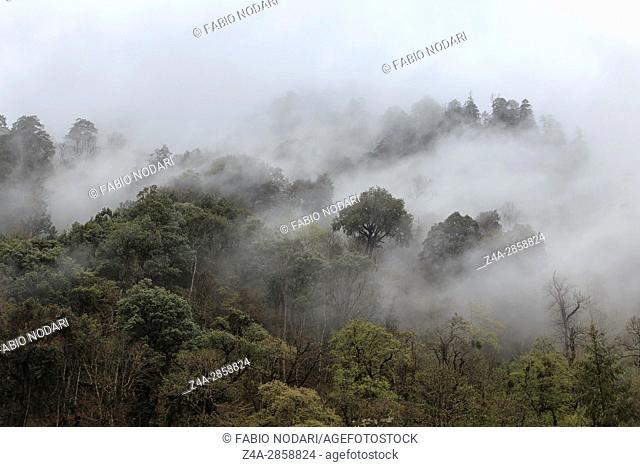 Remote foret in souther China home to the Yunnan Black Snub-Nosed Monkey (Rhinopithecus Bieti))