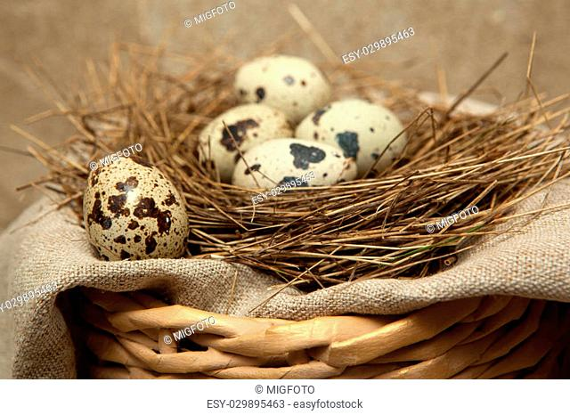 Bird's nest of straw with quail eggs on linen fabric