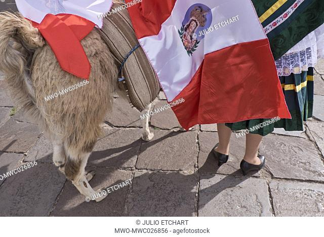 Native Quechua people put ribbons on a llama to celebrate the day of San Jeronimo, the patron saint of the city