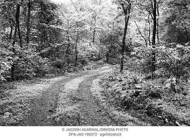 Forest path Borivali National park Mumbai Maharashtra India 1972