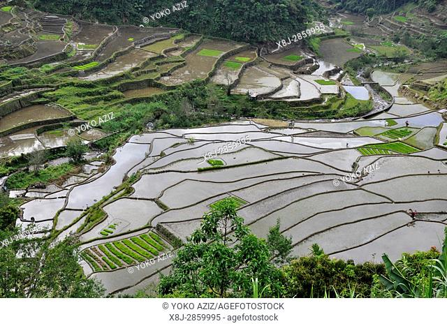 Philippines, Banaue rice fields