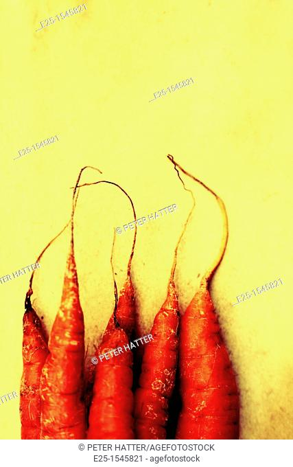 Close up of the tips of Carrots organically grown