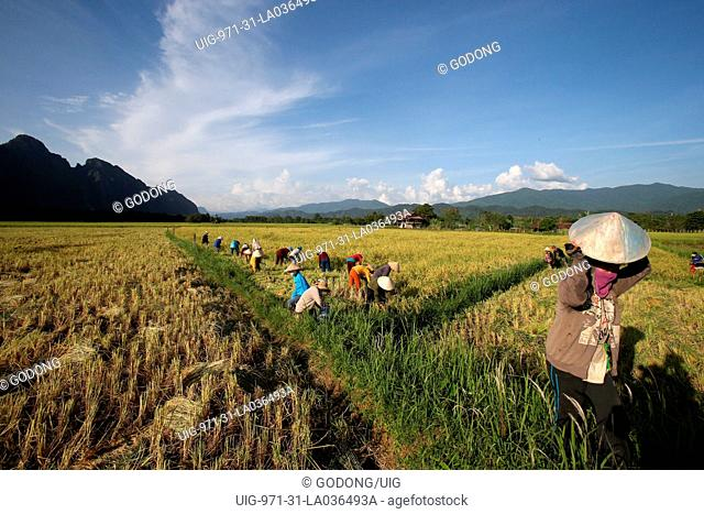 Rice fields with stunning mountain back drop