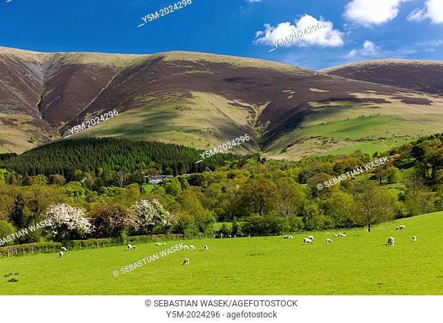 Cumbrian landscape near Keswick, Lake District National Park, Cumbria, England, UK, Europe