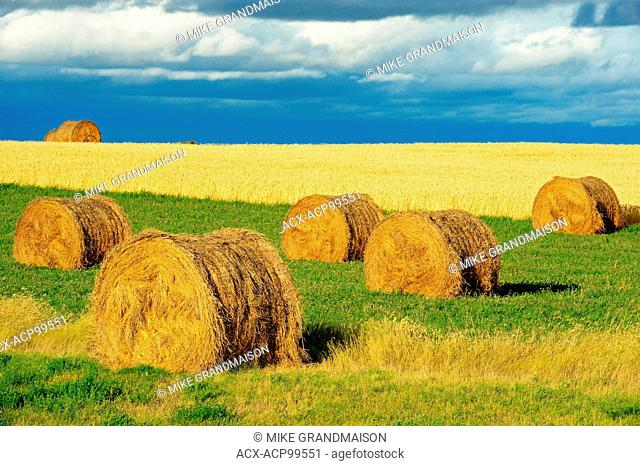 BAles and what near Flowing Well Saskatchewan Canada