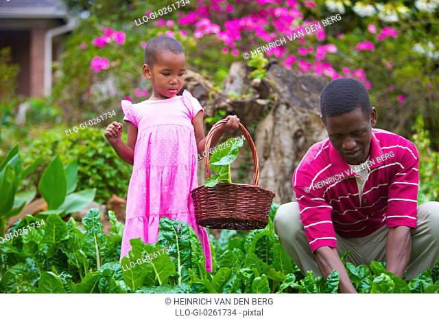 One child and one man in the cabbage patch, KwaZulu-Natal, South Africa