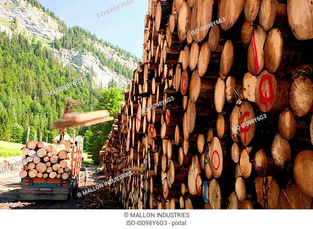 Pile of logs and truck