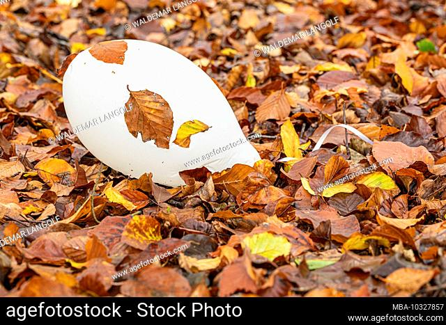 white air balloon between autumn leaves in the forest