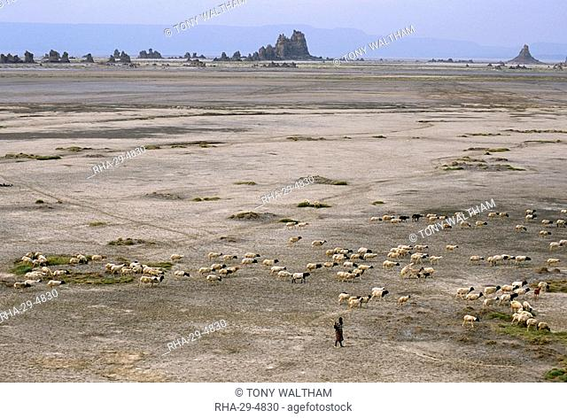 Lac Abhe Abbe in wide rift valley, tufa towers, relics from old lake at higher level, Afar Triangle, Djibouti, Ethiopia