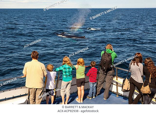 Humpback Whale, (Megaptera novaeangliae), and whale watchers, Witless Bay Ecological Reserve, Newfoundland, Canada
