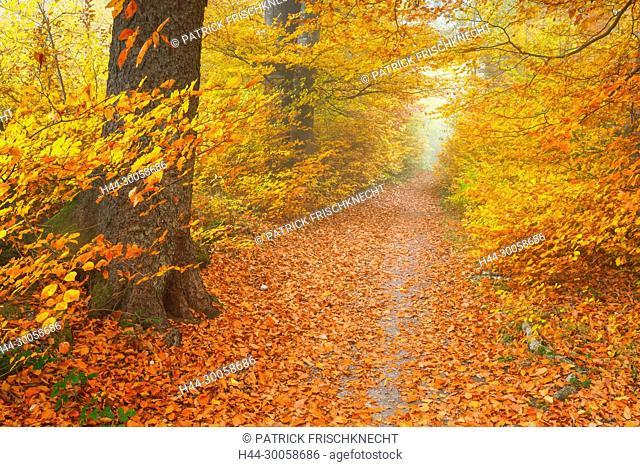 Forest way in the Zurich uplands, Switzerland