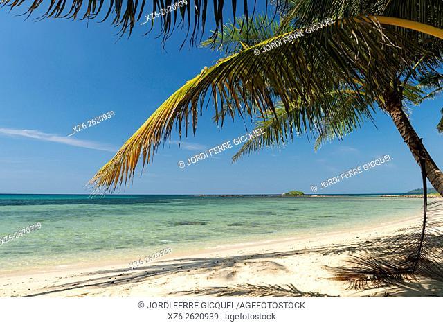 Palm on the beach, Koh Kood island, Ko Kut district in Trat Province, Thailand, Asia