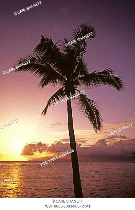 Palm tree silhouetted by bright pink and yellow sunset sky