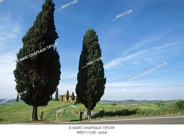 Italy, Tuscany, Orcia Valley, cypress by road