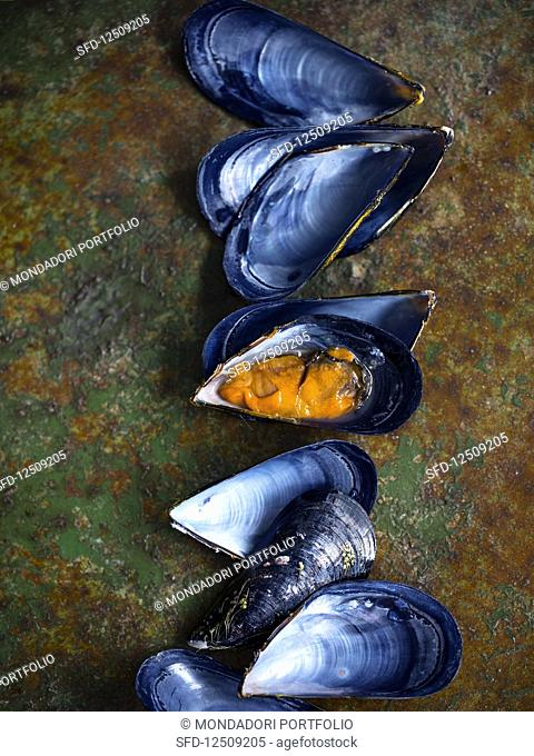 Mussels and shells on a rusty surface