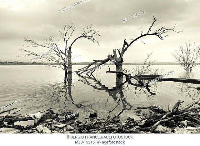 Trees in Bellus reservoir, Spain