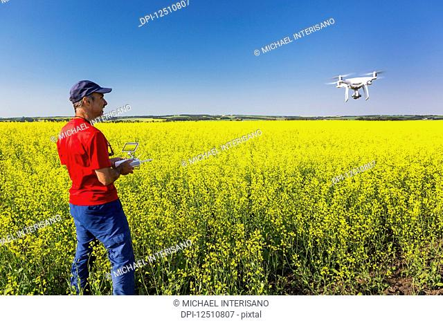 Man flying a drone over a flowering canola field, North of Sylvan Lake; Alberta, Canada
