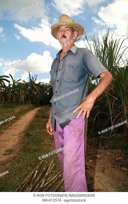 Old farm labourer in a sugarcane field, Vinales, Pinar del Río Province, Cuba, Latin America