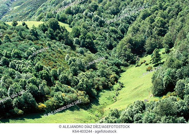 Meadows and forest, San Glorio, Liébana. Cantabria, Spain