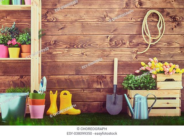 Gardening tools and on the grass in the backyard. Fresh flowers and plants in the spring