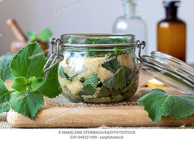Preparation of a homemade herbal syrup against common cold from silver spurflower and cane sugar
