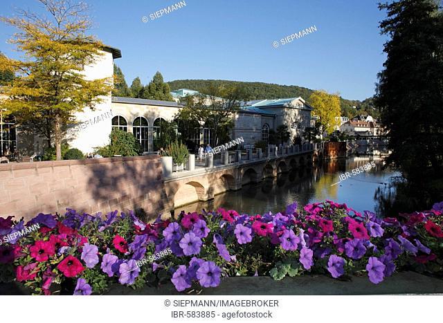 Bad Kissingen, Saale river, Petunia, Rhoen, Franconia, Germany