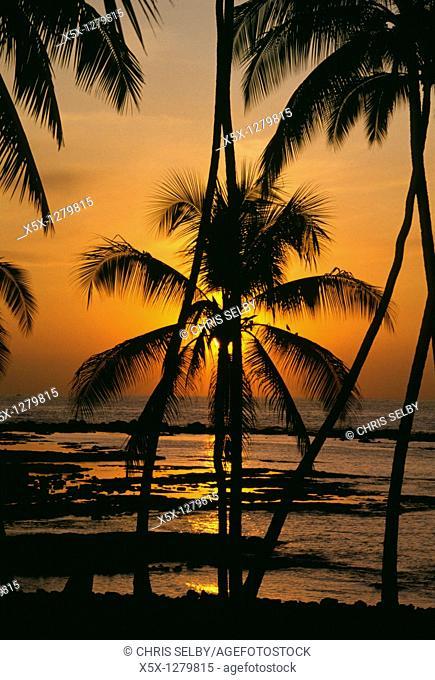 Sunset behind palm trees at Kahalu'u beach, Big Island, Hawaii, USA
