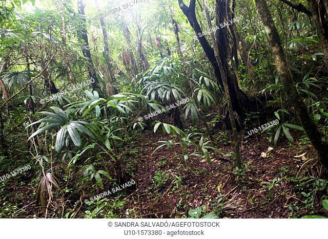 Natural Reserve of the Biosphere Montes Azules, Las Nubes, Chiapas, México