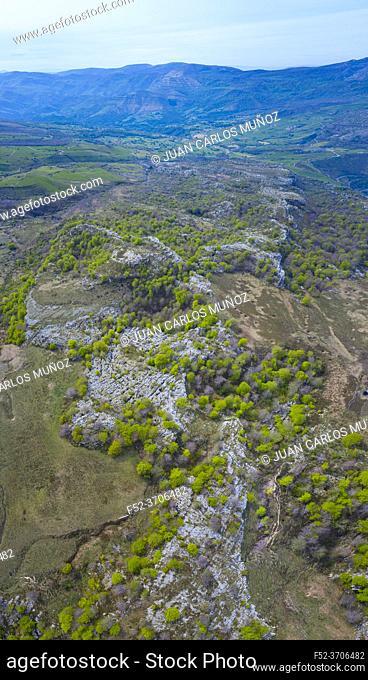 Beech forest in springtime, Astrana, Alto Ason, Soba Valley, Cantabria, Spain, Europe