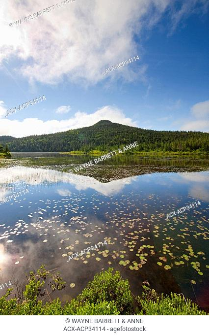 Pond in spring time near Colbert's Cove, Newfoundland and Labrador, Canada