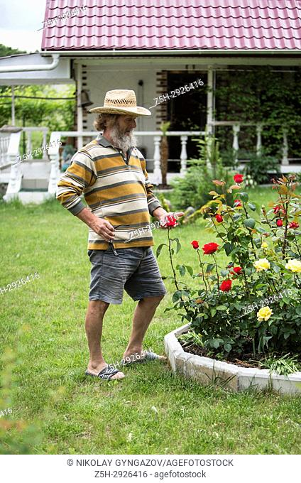 An elderly man with a beard beside a flower bed with roses