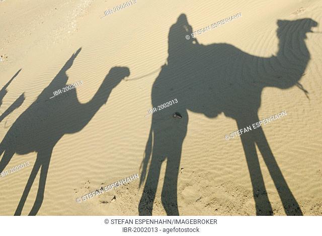 Desert trekking, shadows, Arabian camels, dromedaries (Camelus dromedarius), Dakhla Oasis, Libyan Desert, also known as Western Desert, Sahara, Egypt, Africa