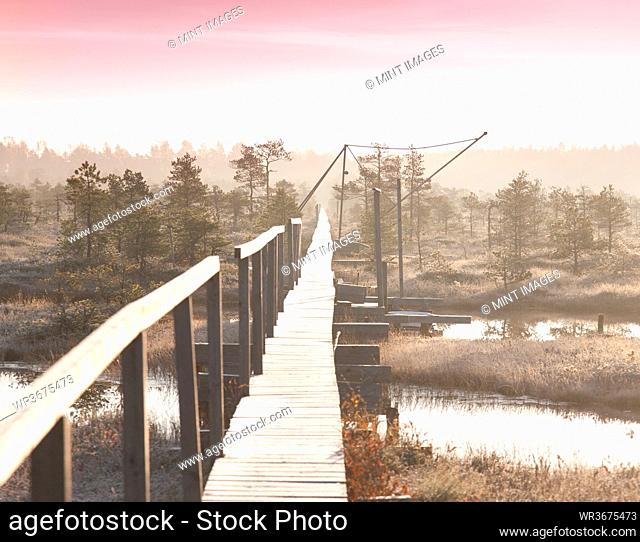 Wooden Boardwalk over Marsh