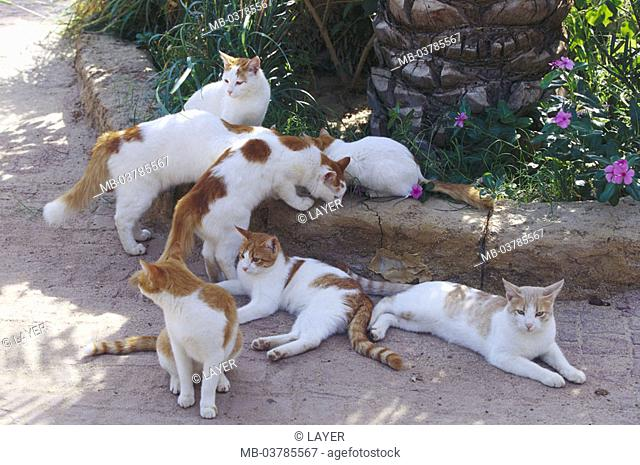 Garden, wayside, cats, red-white   Animals, mammals, pets, house cats, seven, free-living, same color, lie, sitting, peacefully, observing, alertly