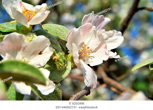 Spring flower on a tree