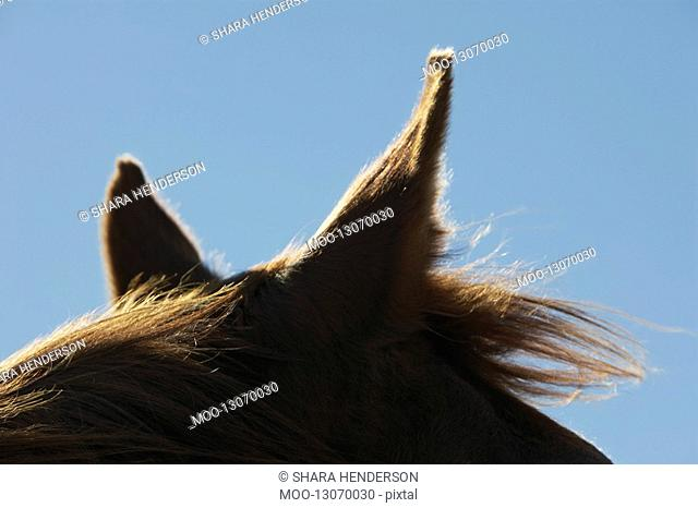 Brown horse against sky close-up of ears