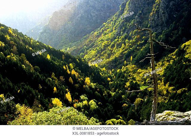 Fresser valley, Pyrenees. Gerona. Catalonia. Spain