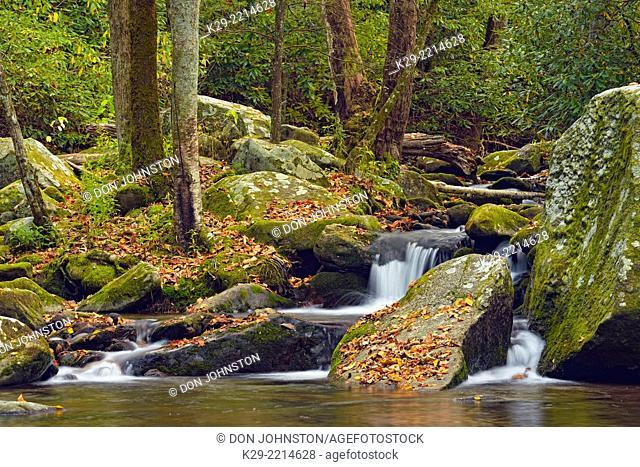 Autumn foliage around Big Creek, Great Smoky Mountains National Park, Tennessee, USA