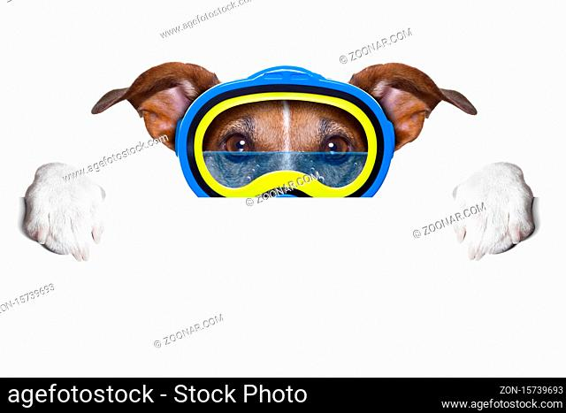 scuba dog with goggles hiding behind white blank banner or placard
